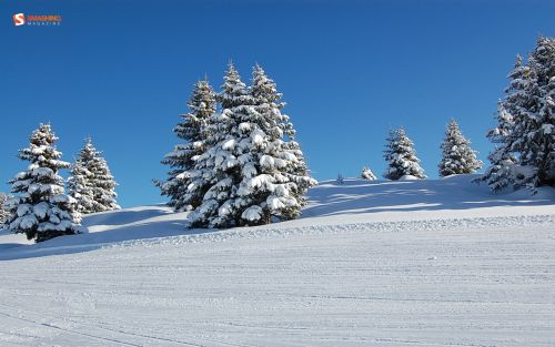december 10 fresh white  6 nocal