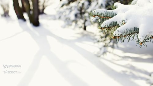 december 10 snowy love  26 nocal