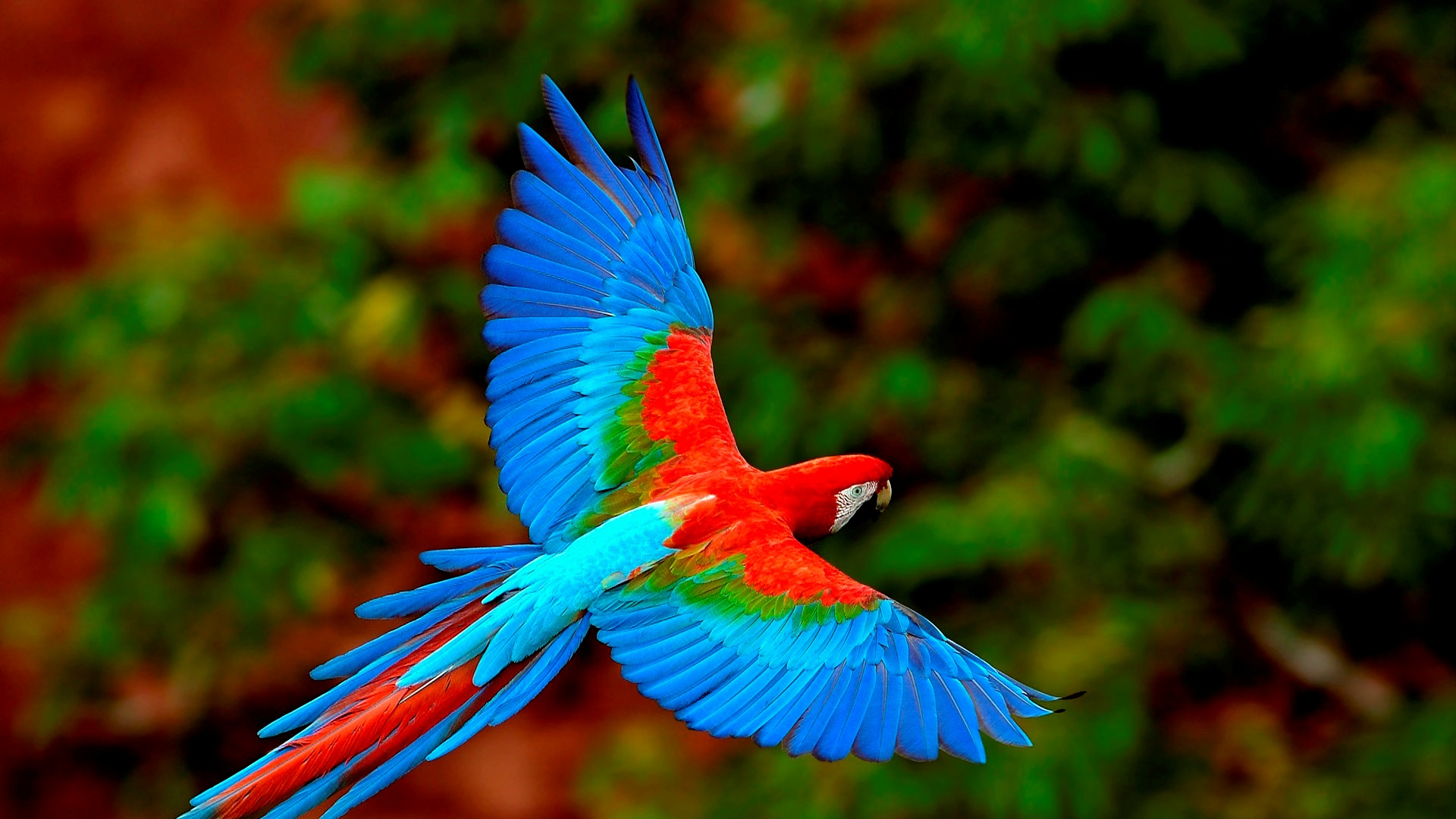 I 10 sfondi per pc di questa settimana 07 09 12 13 10 for Immagini desktop natura
