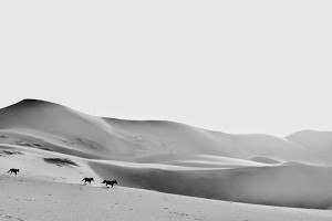 Horses on sand dunes by Matthias Siewert