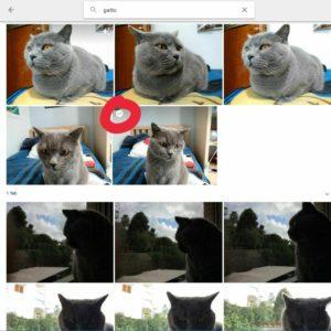 GIF Google Foto