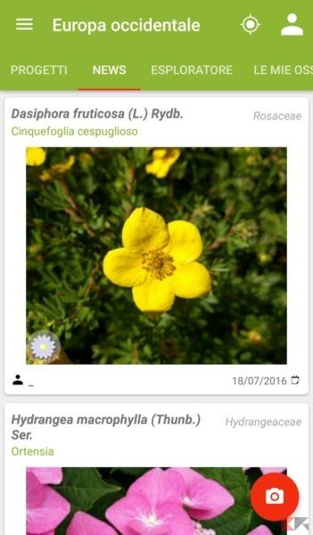 le migliori app per riconoscere le piante chimerarevo