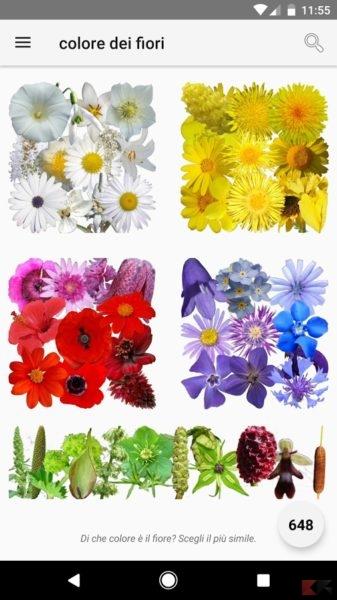 E questo che fiore è?
