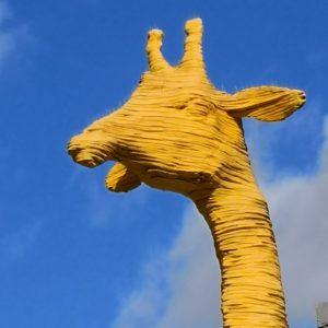 Girafe5x HuaweiMate10 DxOMark2015 P04 05 00