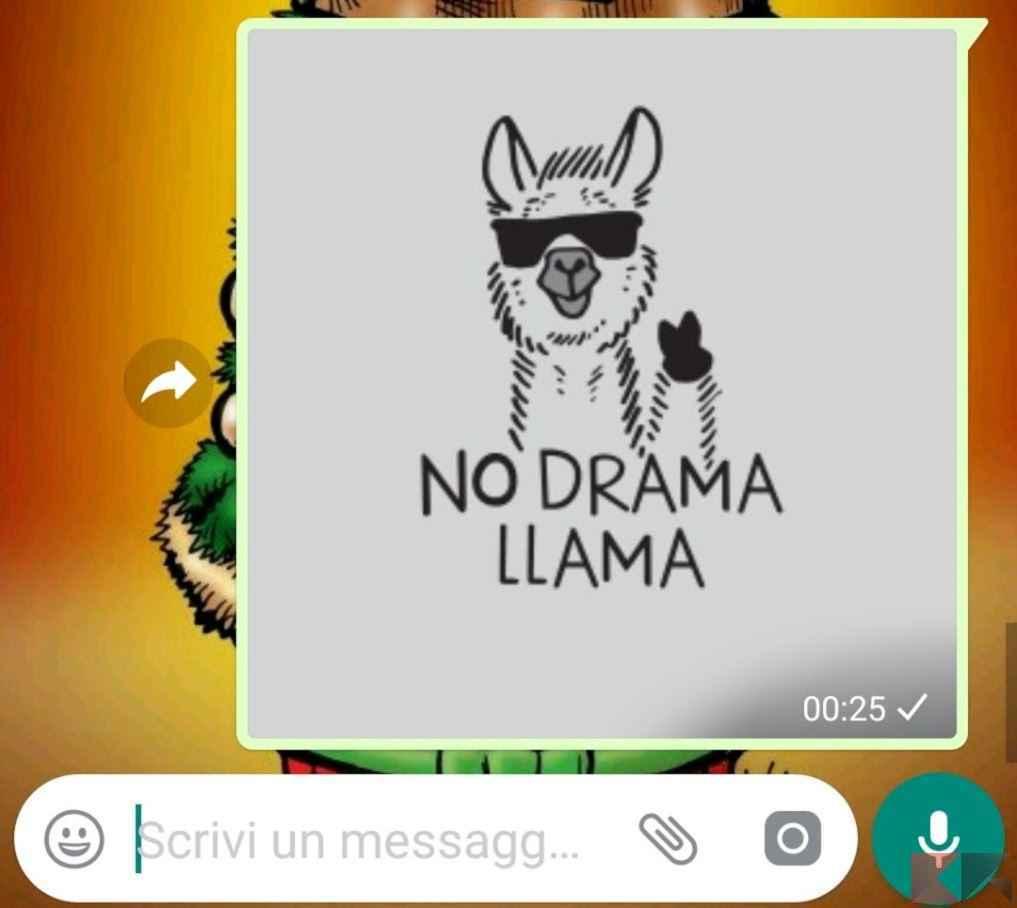 immagini per whatsapp