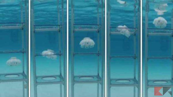 Robot Medusa sorveglieranno la barriera corallina