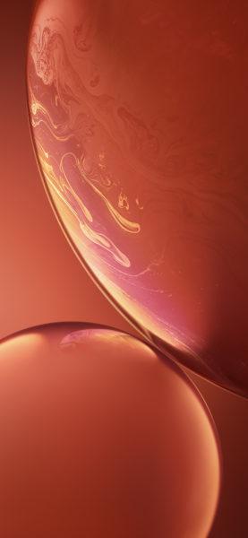 sfondo iPhone XR coral