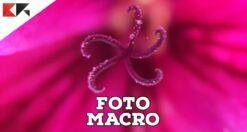 foto-macro-iphone